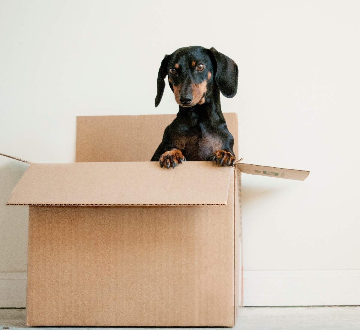 Pet removal services for Cairns, Townsville, Brisbane. Local Moves.